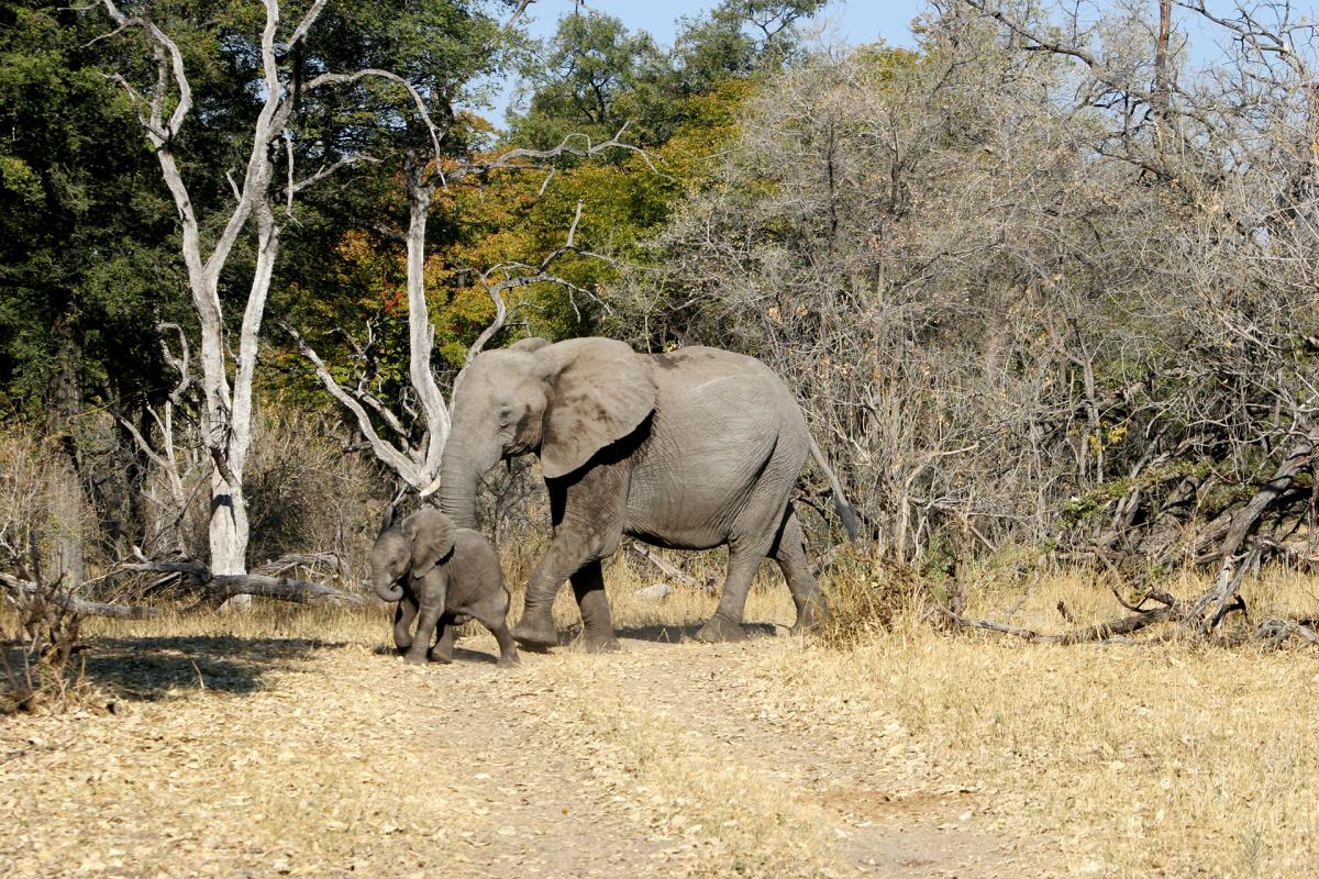 Okawango Delta: Elephants - Photo Credits: Romina Facchi