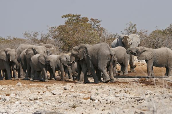 namibia africa elephant national parks etosha