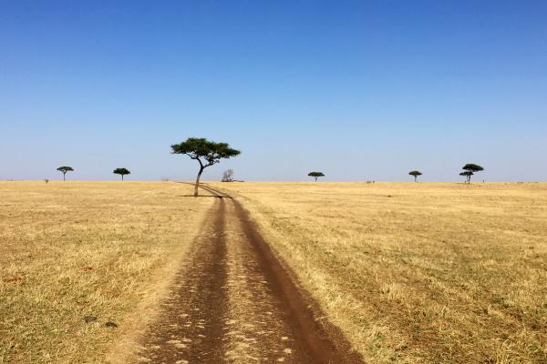 Serengeti National Park: wonderful no ending landscape, savannah and acacia
