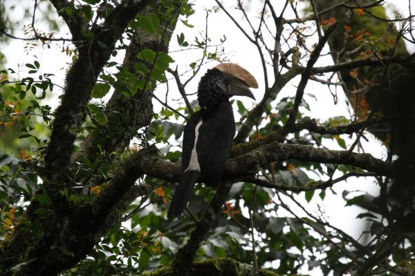 arusha tanzania romina facchi africa exploringafrica silvery cheecked hornbil