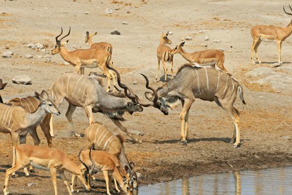etosha National Park kudu romina facchi safariadv exploringafrica