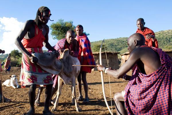 maasai use cow blood like food