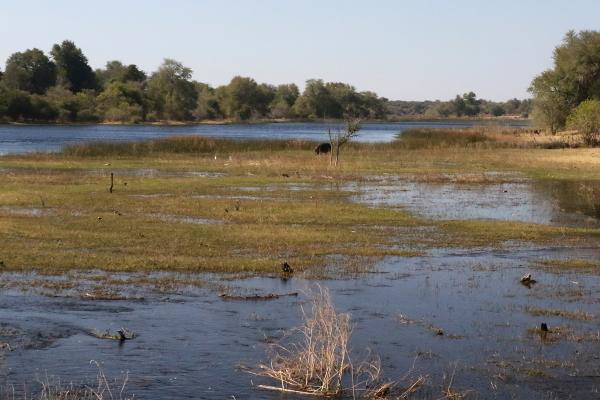 botswana maun exploringafrica safariadv romina facchi