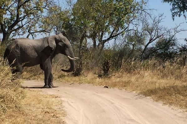moremi botswana exploringafrica safariadv romina facchi elephant safari gamedrive travel