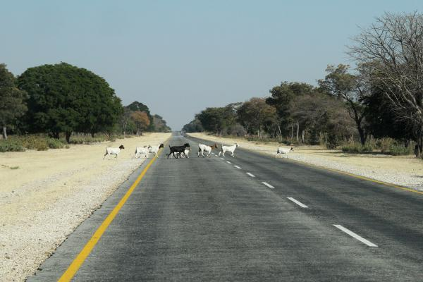 namibia exploringafrica safariafv safari romina facchi namib ontheroad travel
