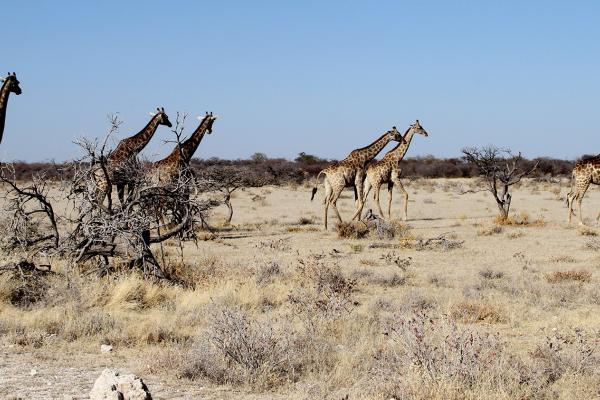 namibia exploringafrica safariafv safari romina facchi etosha travel safari