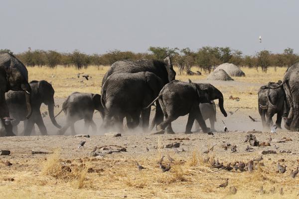 namibia etosha safariadv exploringafrica romina facchi elephant