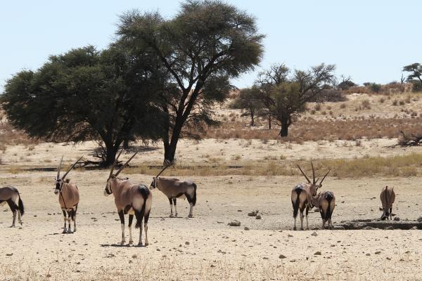 kgalagadi exploringafrica safariadv romina facchi namibia travel safari