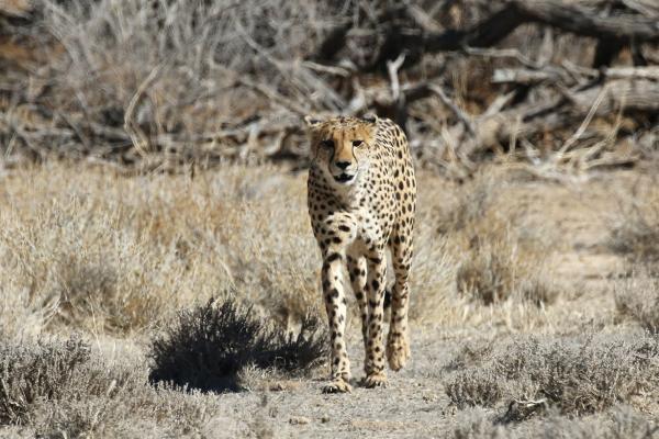 kgalagadi namibia exploringafrica safariadv romina facchi travel safari