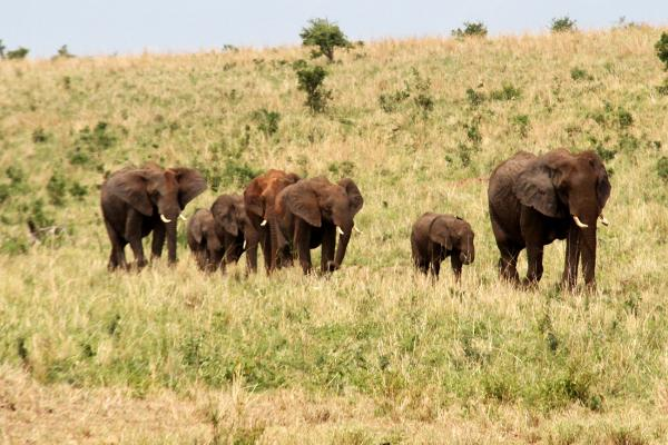 elefanti zimbabwe exploringafrica safariadv romina facchi