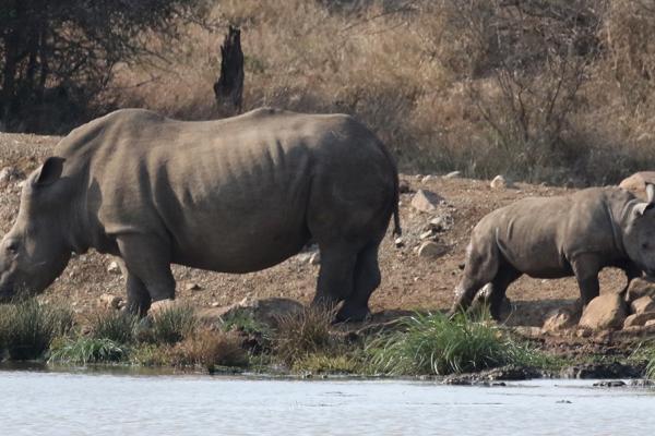 swziland exploringafrica safariadv romina facchi travel safari africa