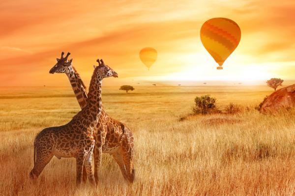 kenya giraffe mongolfiera tramonto safari
