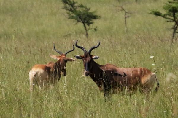 etiopia ethiopia exploringafrica safariadv travel omo valley Senkele Swayne Hartebeest Sanctuary