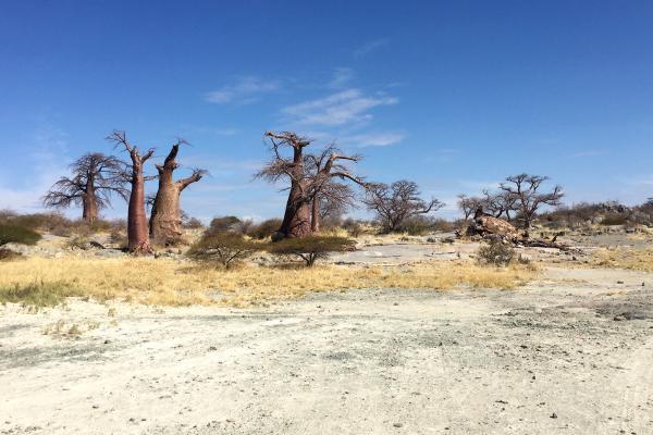 botswana safari kubu island africa safariadv exploringafrica romina facchi