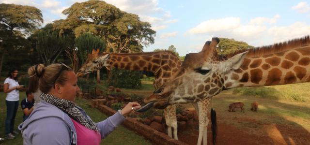 kenya Nairobi giraffe manor africa safariadv exploringafrica