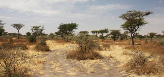 Serengeti National Park: Eastern sector