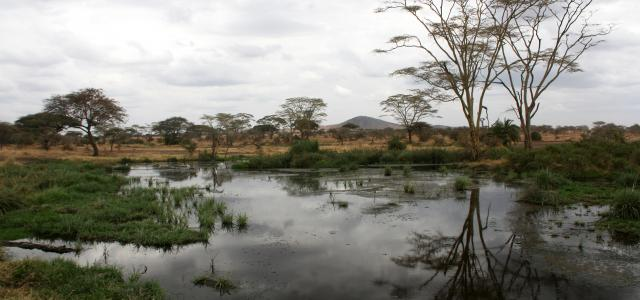 Serengeti National Park: lake, acacias and hills in background