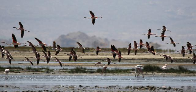 Natron Lake: one of the preferred place from flamingos for breeding