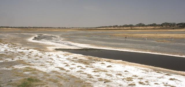 Lake Ndutu during the dry season: an endless salt pan