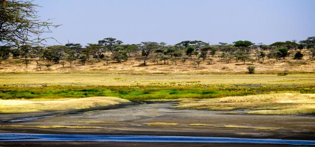Serengeti National Park: Lake Ndutu during green season
