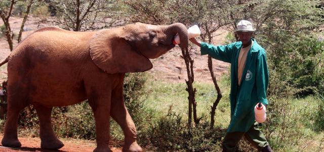 nairobi kenya david sheldrick wildlife romina facchi exploringafrica africa