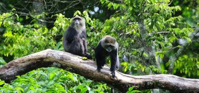 arusha tanzania romina facchi africa exploringafrica blue monkey