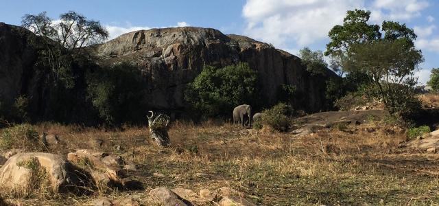 Serengeti National Park: Lobo Valley elephant and kopjes