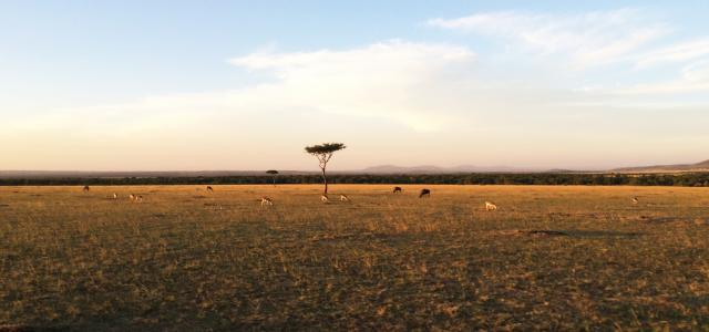 Masai Mara National Reserve landscape at the sunset