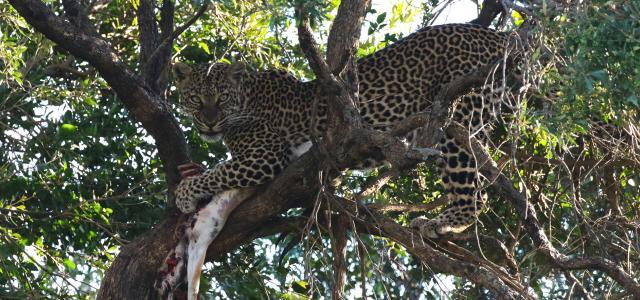 masai mara exploringafrica savannah romina facchi safariadv Ol Choro Oiroua Conservancy