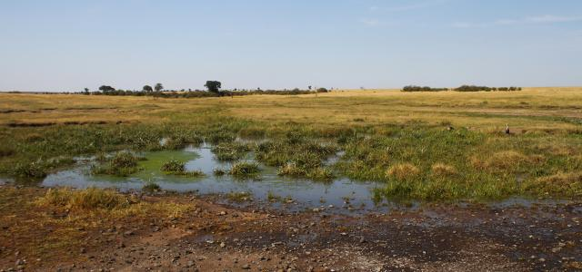 masai mara exploringafrica savannah romina facchi safariadv Lemek Conservancy