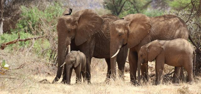 elephants at Samburu National Reserve kenya romina facchi
