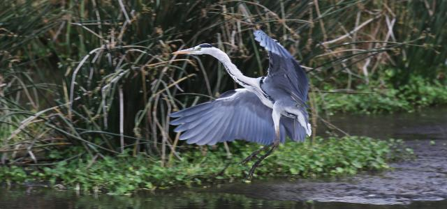 heron in Ngorongoro Conservation Area