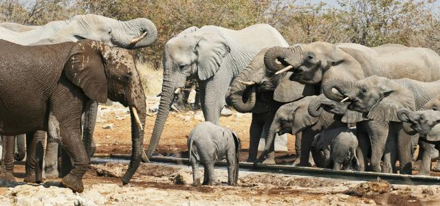 Etosha National Park pan and elephants Namibia Romina Facchi Africa