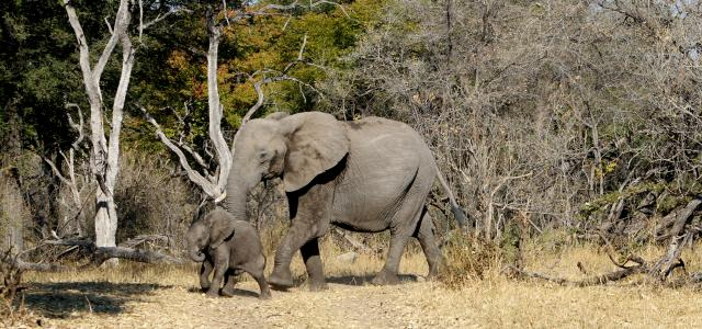 okawango delta exploringafrica safariadv romina facchi travel viaggi elephant