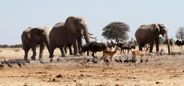 botswana safari nxai pan elephant africa safariadv exploringafrica romina facchi