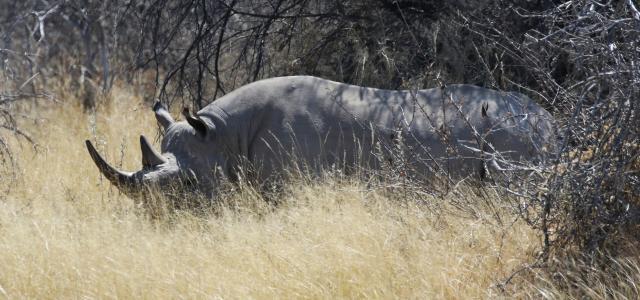moremi botswana exploringafrica safariadv romina facchi safari gamedrive travel