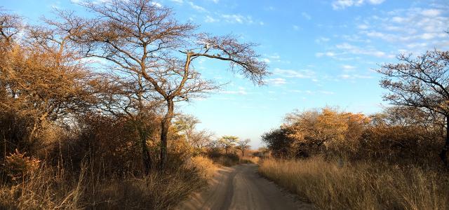botswana safari khama rhino sanctuary africa safariadv exploringafrica romina facchixploringafrica romina facchi
