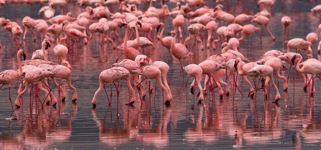 botswana safari sua pan africa safariadv exploringafrica romina facchi