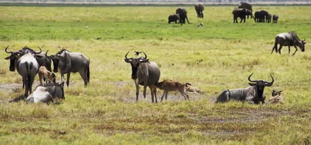 The Great Migration in the south of Serengeti National Park