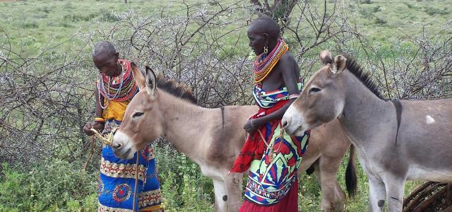 samburu people in kenya with donkey