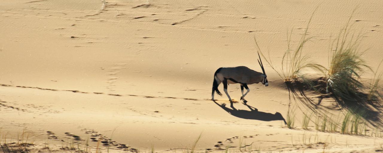 namib-naukluft national park namib desert namibia gemsbok