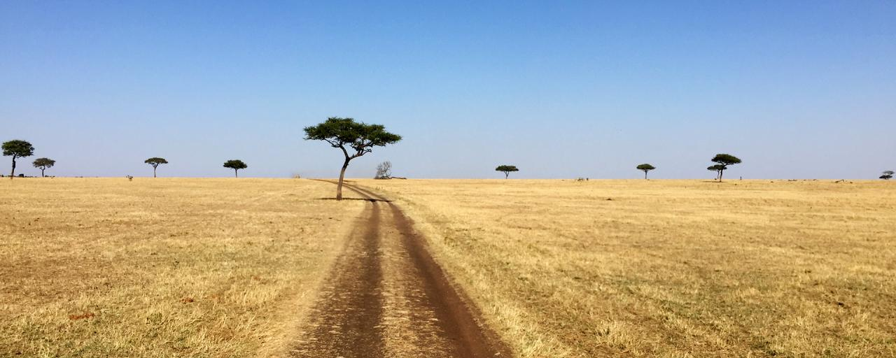 Serengeti National Park: wonderful no ending landscape, savannah and acacia