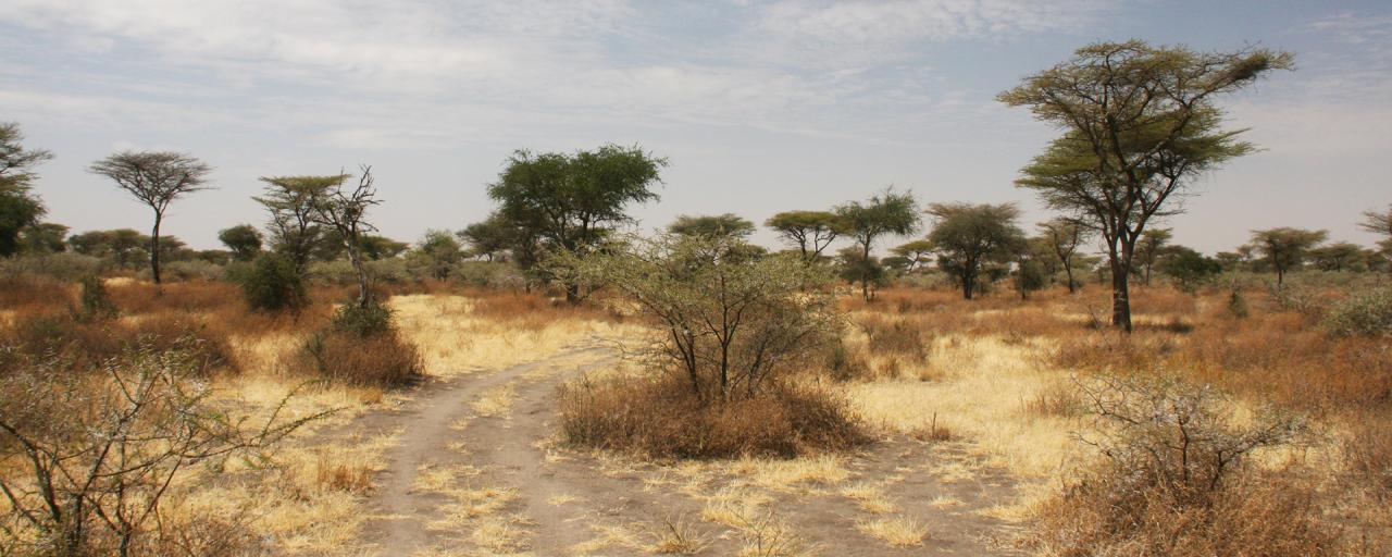 Serengeti National Park: Eastern sector