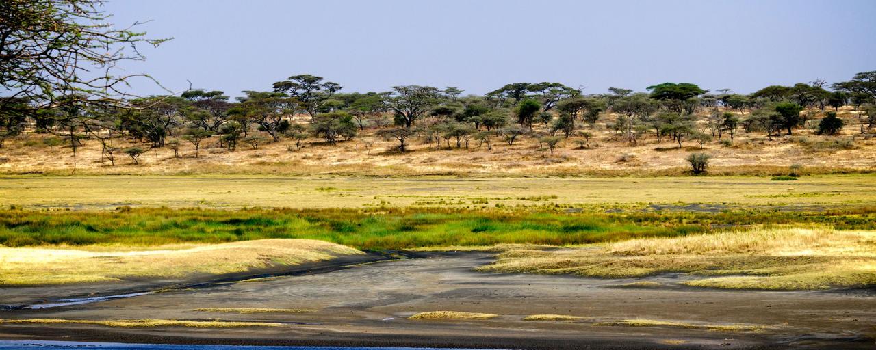 Serengeti National Park: Lake Ndutu during green season