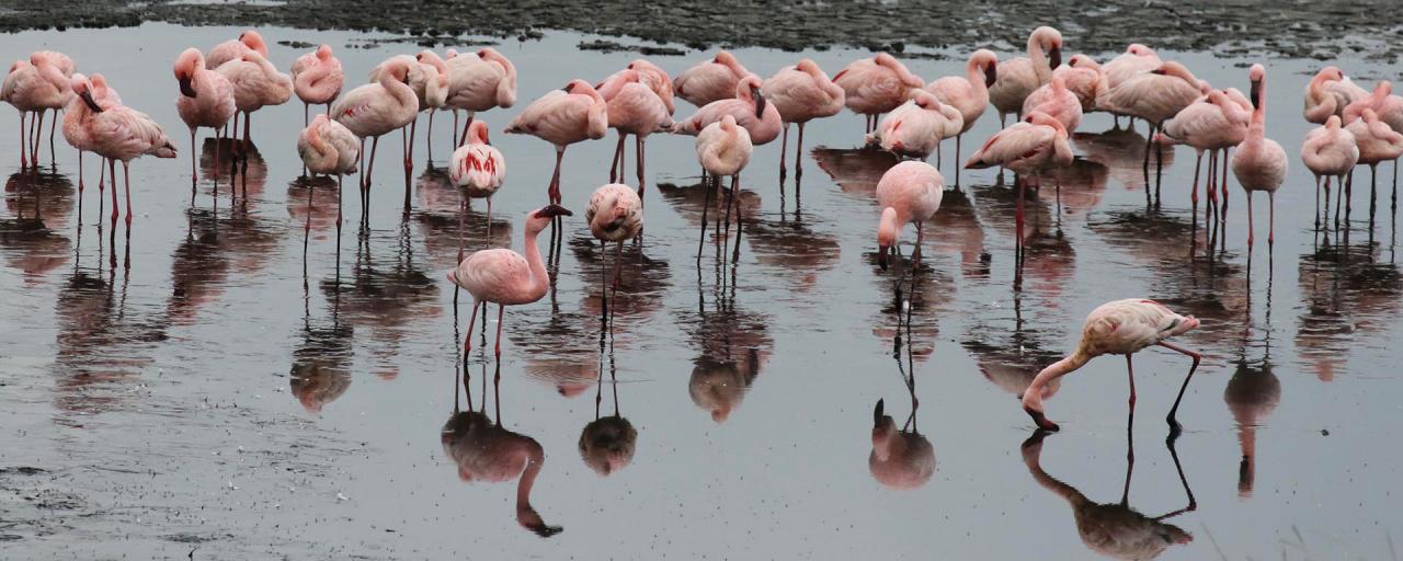 arusha tanzania romina facchi africa exploringafrica lesser flamingo