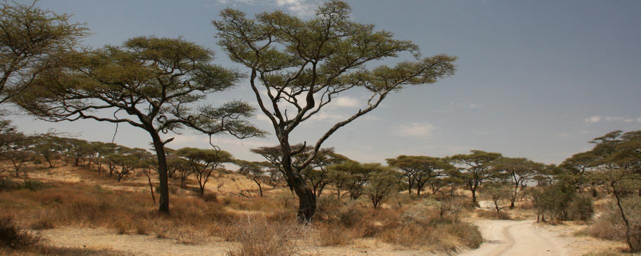 Upper Grumeti Woodlands | Exploring Africa