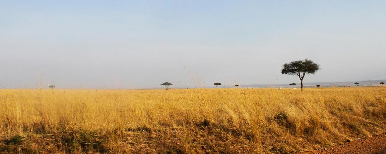 Masai Mara National Reserve landscape