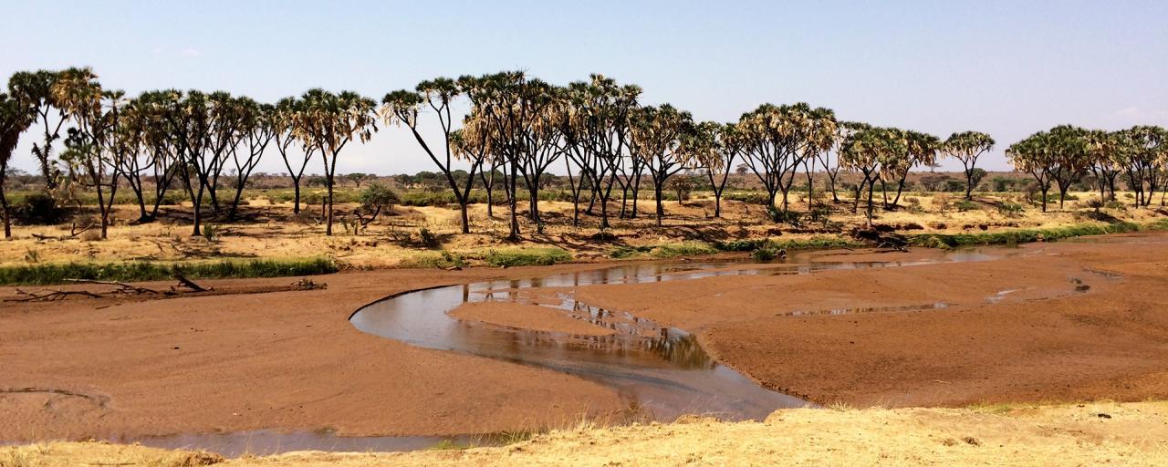 Samburu National Reserve Ewaso Ngiro River Kenya Exploring Africa