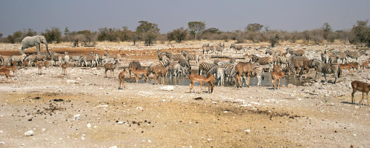 many animals around the water hole in Etosha National Park in Namibia Africa romina facchi