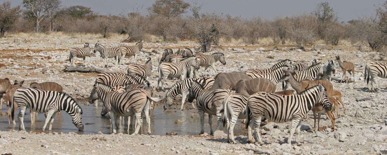 etosha National Park the pan zebras kudus Namibia romina facchi